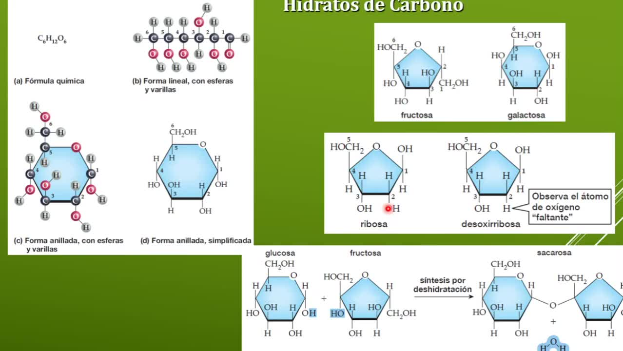Unidad 1 Parte 2 Biología teóricas