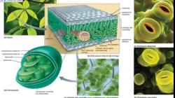 UNIDAD 2 BIOLOGIA UNM teoricas 2020 parte 2 VIDEO