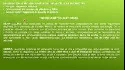 02 Clase 2 CÉLULA BIO TP UNM 2020 con grab Deby COMPRIMIDO