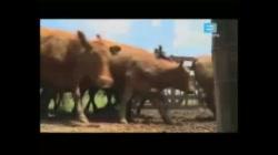 La economia primaria agroexportadora