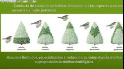 UNIDAD 4 BIOLOGIA UNM teoricas 2020 PARTE 4 VIDEO